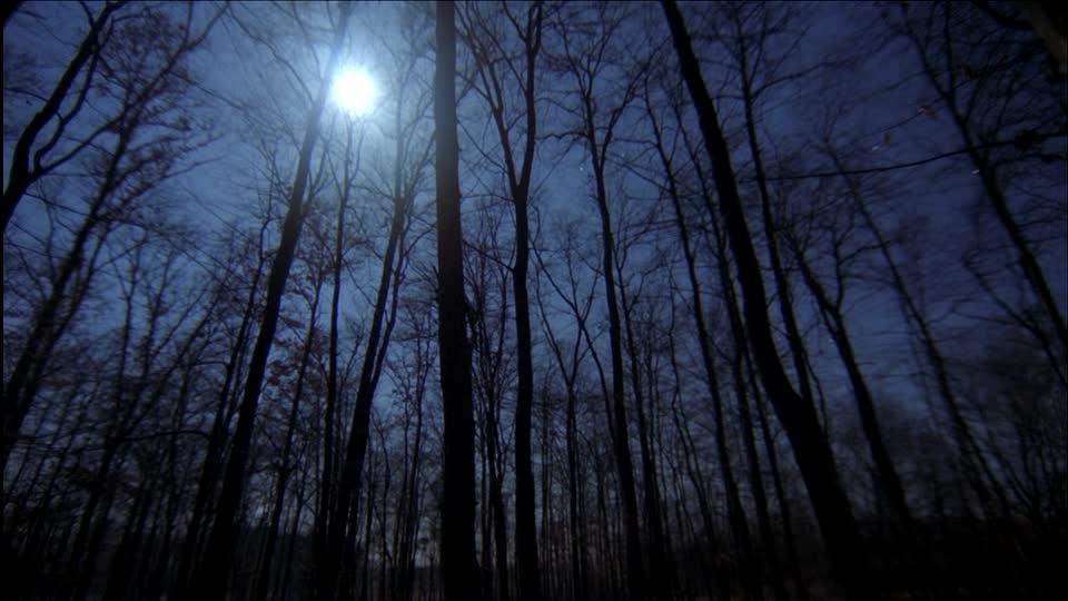 586173051-luna-piena-albero-spoglio-siluette-notte